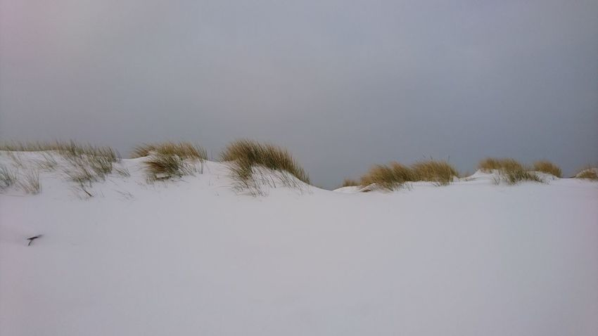 De blanke top der duinen... Dutch dunes covered in snow. Winter Holland Snow Beach Dunes Zuid-Hollands Landschap Noordwijk Aan Zee Noordzee Nederland Beach Life Shore Beach Photography The Great Outdoors - 2017 EyeEm Awards