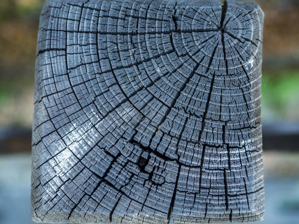 Close-up Tree Trunk Tree Stump Wood - Material Textured  Tree Ring Tree No People Day Focus On Foreground Cracked Nature Outdoors Branch