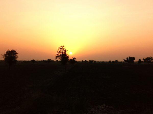 Tree Sunset Silhouette Tree Area Sky Landscape Atmospheric Mood Moody Sky