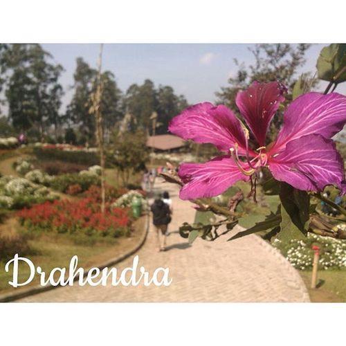 At Dusunbambu Drahendra
