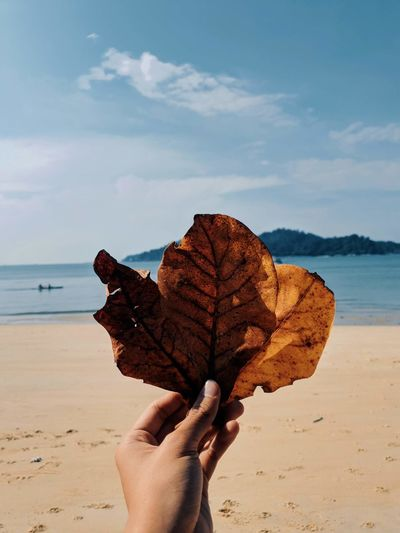 Cropped hand holding leaf at beach against sky