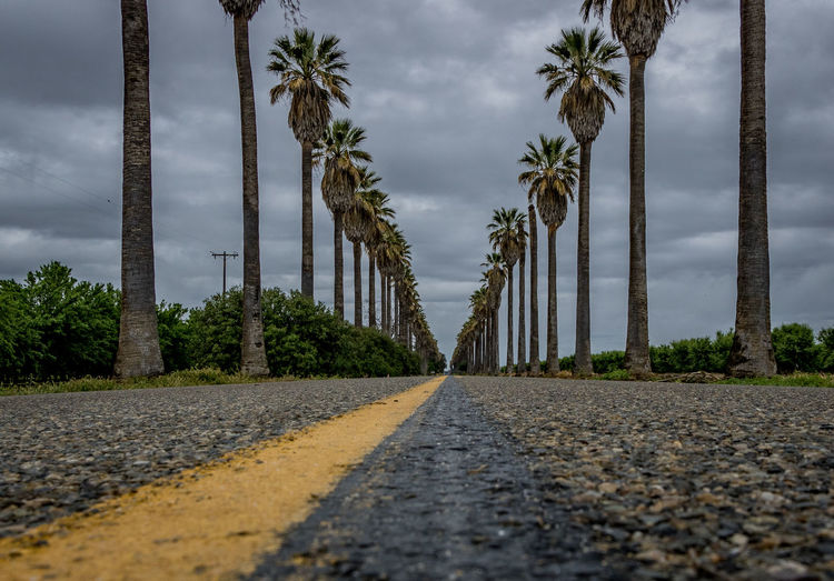 Cloud - Sky Day Nature No People Outdoors Palm Tree Road Sky The Way Forward Transportation Tree