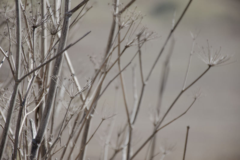 BukitTeletubbies Twigs Background Texture Backgrounds Bokeh Branch Twig Twigs And Branches
