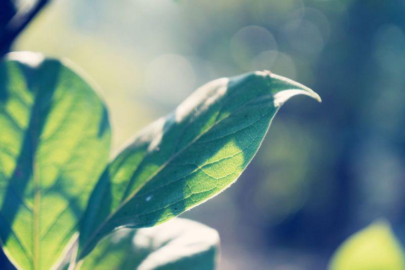 leaf Leaf Green Color Close-up Plant Nature No People Outdoors Japan