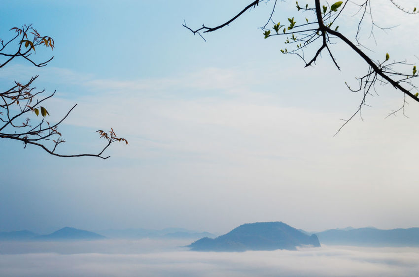 amazing landscape with sky mountain and sea of mist,use for background,chiang khan thailand. Copy Space Fly Heaven Holiday Sea Of ​​clouds Bare Tree Beauty In Nature Blue Sky Branch Clean Clear Sky Clear View Day Mountain Nature No People Outdoors Scenics Sea Of Mist Sky Space Tranquil Scene Tranquility Tree Vacation