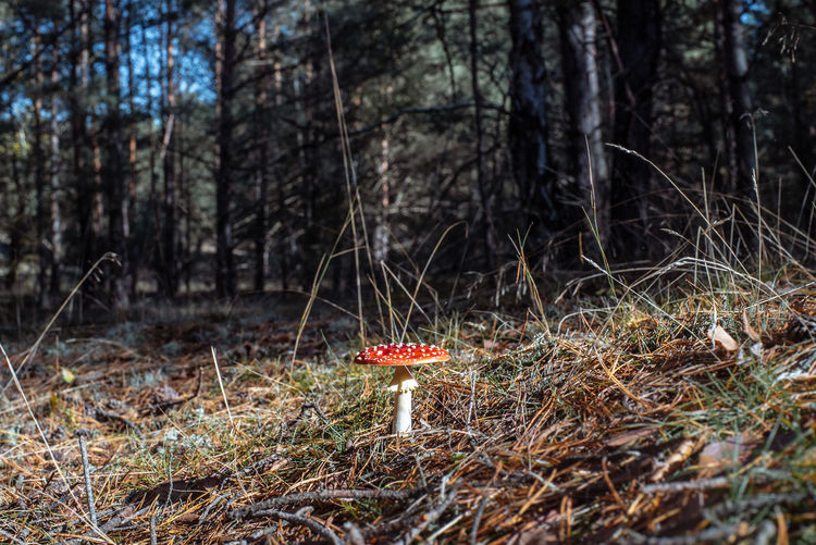 Mushroom growing on field in forest