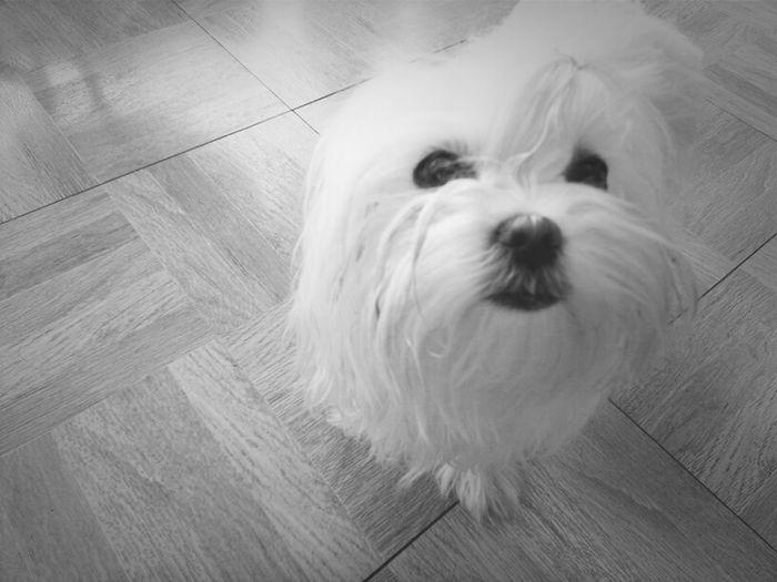 Blackandwhite Dog Love