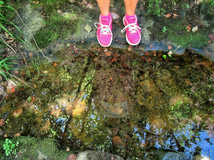 Baby Frogs Contact Nature Day Green Color High Angle View Human Foot Immersed In Nature Life In Motion Lifestyles Low Section Lumicar Moss Nature Outdoors Pause Person Personal Perspective Petal Pink Color Puddle Reflections Sneakers Standing Vibrant Color Water