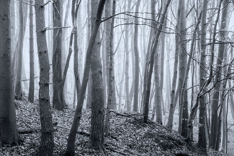 Woods at Brackley Gate Misty Winter Bare Tree Beauty In Nature Black And White Branch Day Forest Landscape Nature No People Outdoors Scenics Tranquil Scene Tranquility Tree Tree Trunk