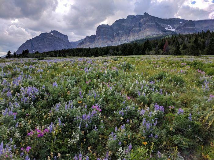 Alpine Landscape Alpine Meadow Wild Flowers EyeEm Selects Flower Head Flower Tree Mountain Snow Flowerbed Sky Landscape Mountain Range Plant In Bloom Wildflower