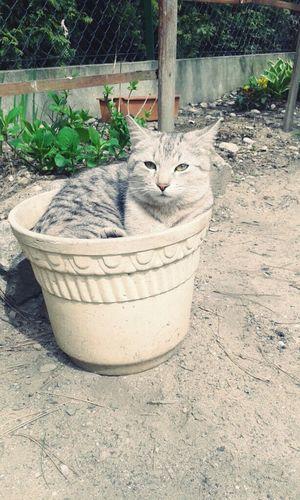 """Cat♡ """" Słodzizna ❤ """""""