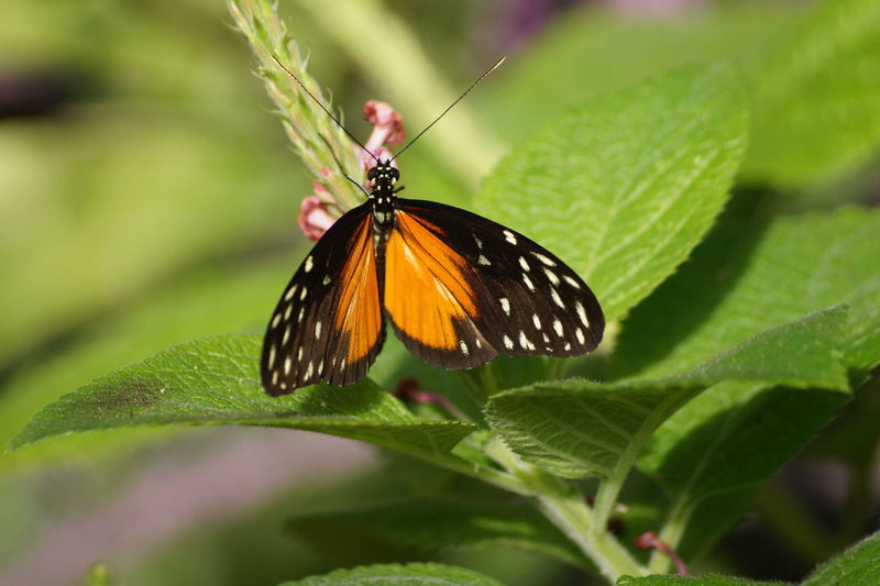 Animals In The Wild Beauty In Nature Butterfly - Insect Green Color No People One Animal Outdoors Plant