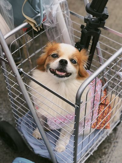 Smileeeeeeeee Canine Dog One Animal Mammal Cage Pets Domestic Vertebrate Domestic Animals No People Close-up Animals In Captivity Looking At Camera Small Metal Portrait Indoors  Day