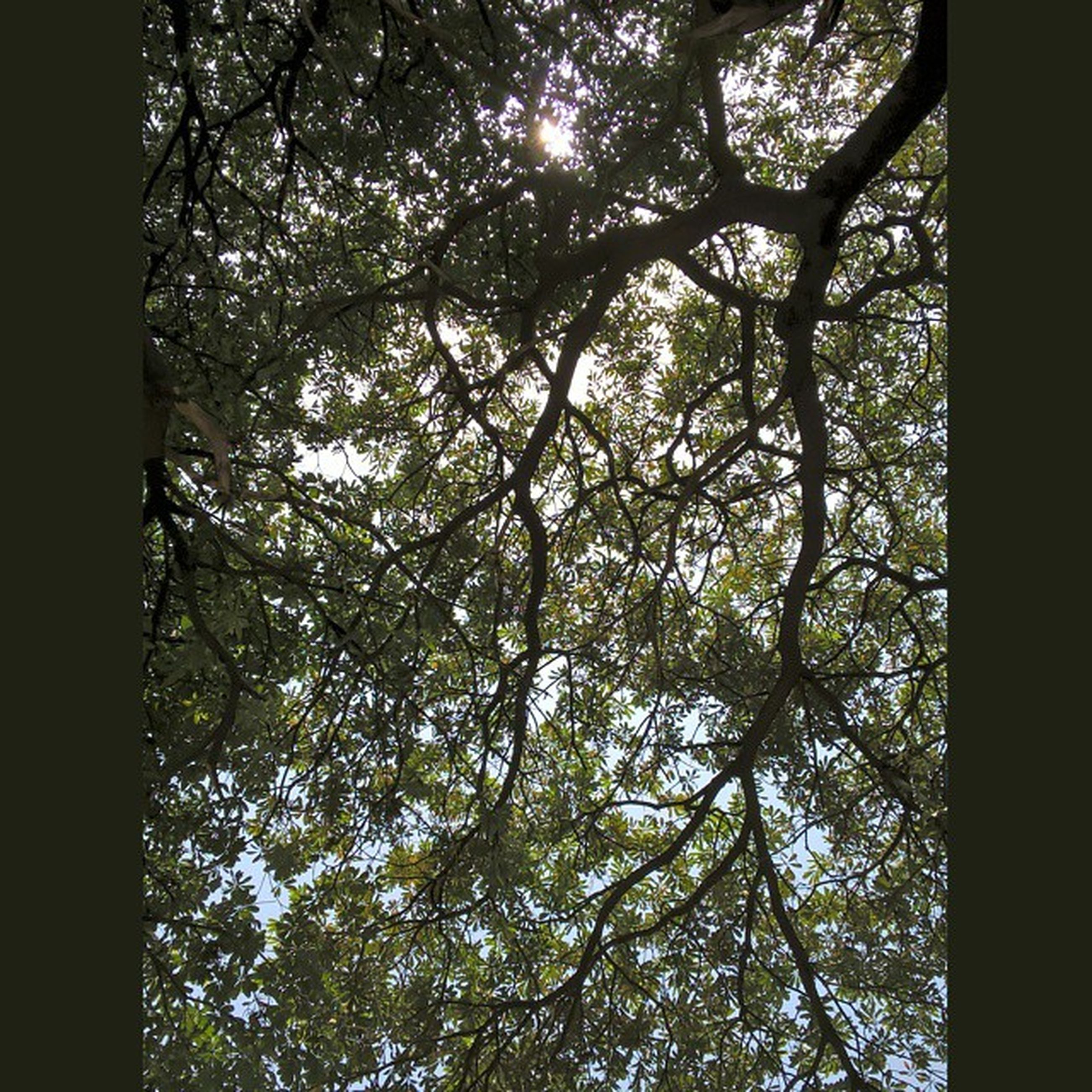 tree, branch, low angle view, tree trunk, growth, nature, tranquility, forest, beauty in nature, backgrounds, full frame, no people, day, sunlight, silhouette, outdoors, sky, scenics, auto post production filter, tranquil scene