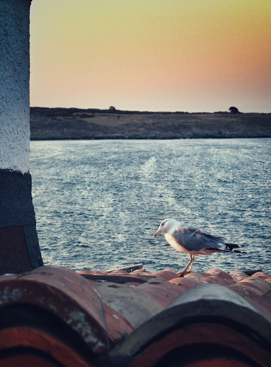 sea, water, sunset, nature, horizon over water, scenics, clear sky, animals in the wild, animal themes, outdoors, no people, bird, beauty in nature, sky, perching, day