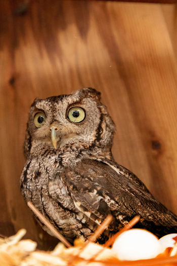 Close-up of owl in nest