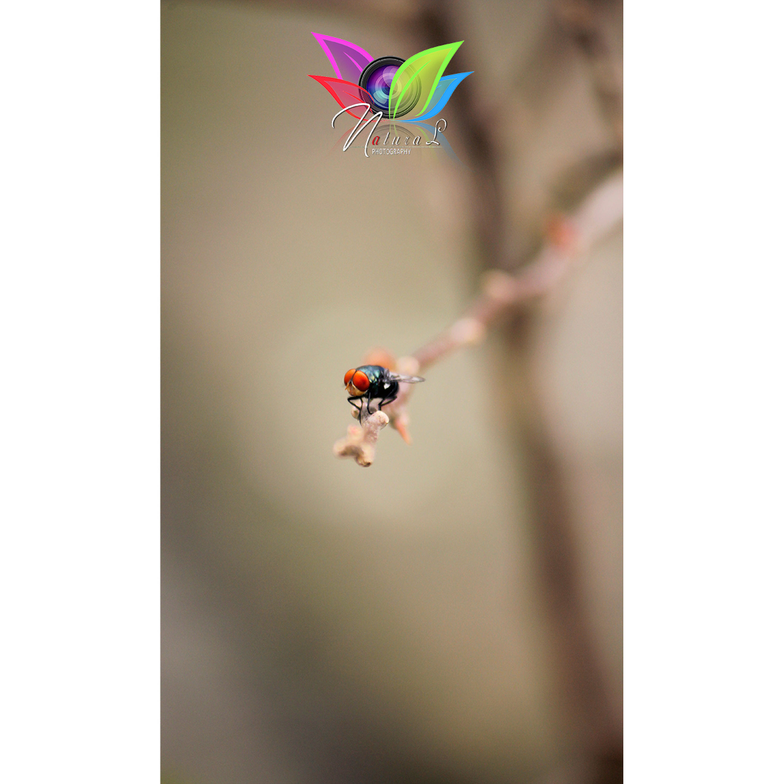 animal themes, insect, animals in the wild, one animal, focus on foreground, day, nature, close-up, no people, animal wildlife, buzzing, outdoors, beauty in nature, fragility