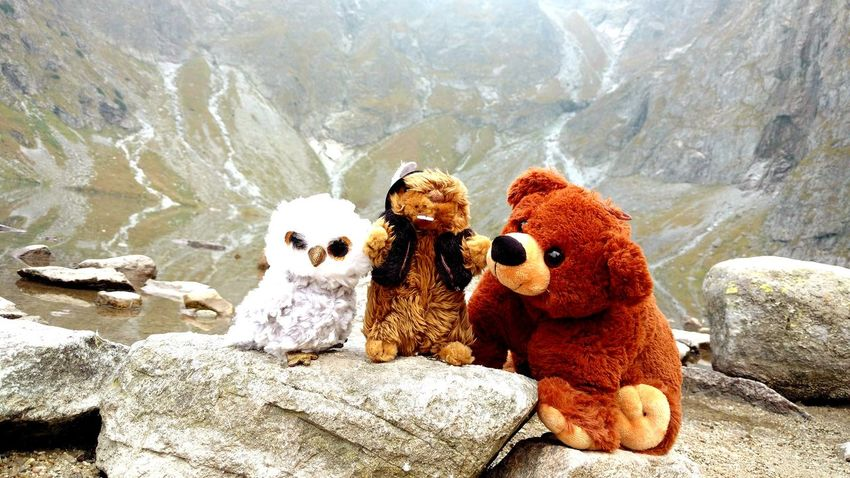 Teddy Bear Stuffed Toy Nature No People Adventure Eye Em Nature Lover Poland Animals In The Wild Wild Animal Tatry Owl Góral Marmot Animals Grizzly Bear Wild Life Team EyeEmNewHere Togetherness Non-urban Scene Landscapes Animal Travel Autumn🍁🍁🍁 EyeEmNewHere The Great Outdoors - 2017 EyeEm Awards