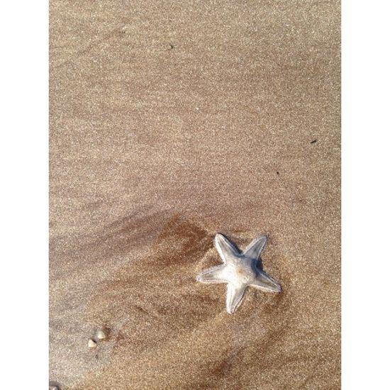 Nofilter StarfishBeSoCute Best Beach Ever. ❤