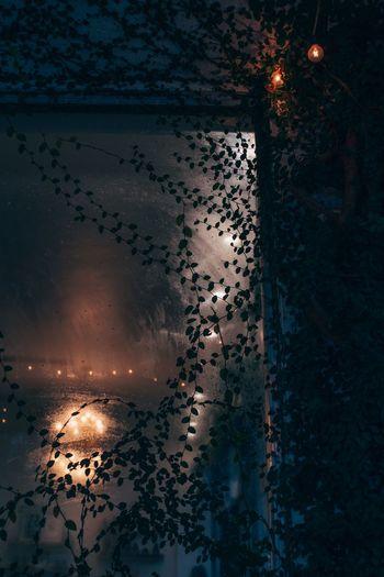 Reflection of illuminated birds in water