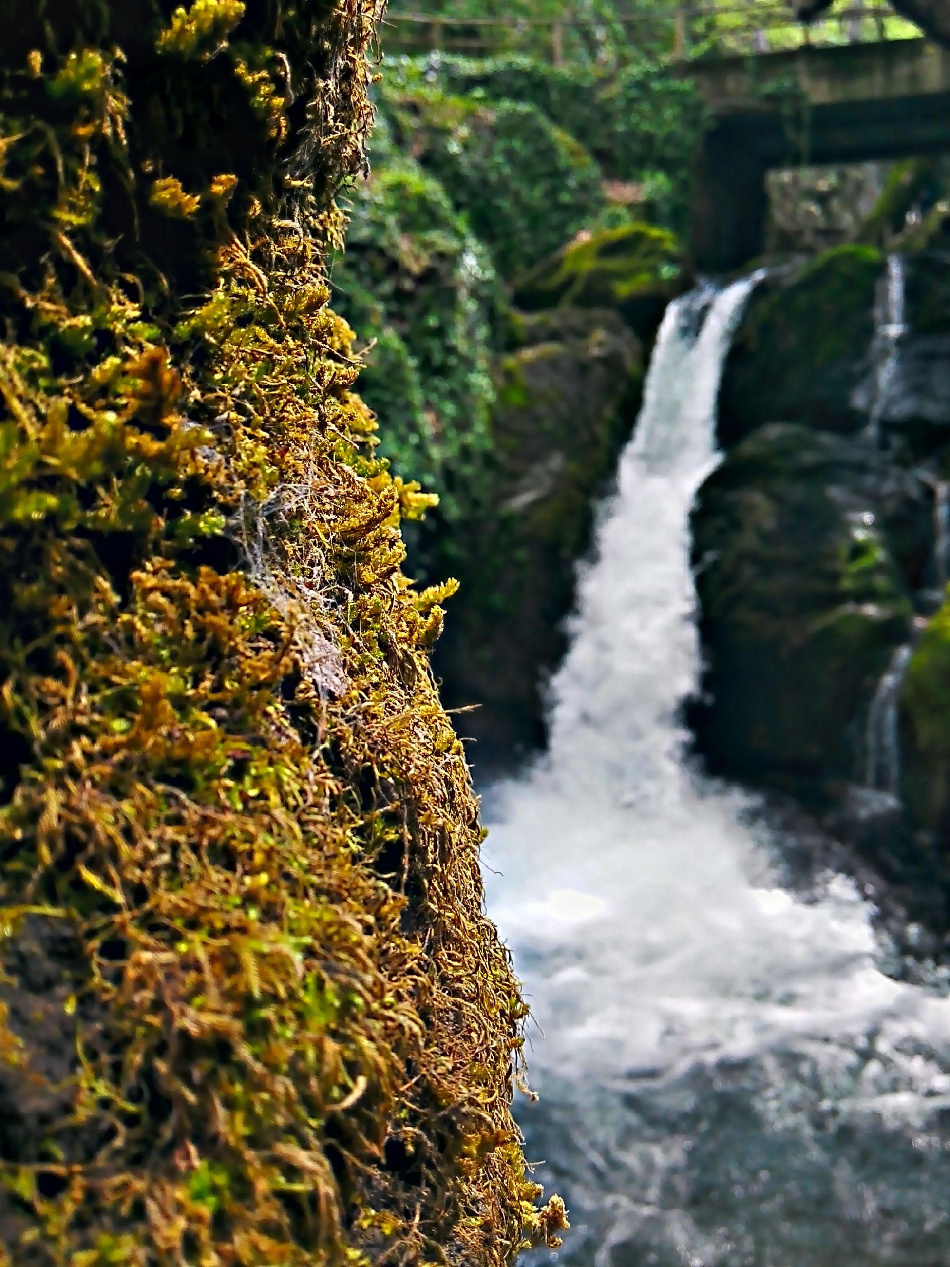 water, flowing water, nature, close-up, waterfall, motion, beauty in nature, plant, flowing, freshness, rock - object, growth, outdoors, focus on foreground, day, moss, forest, waterfront, no people, leaf