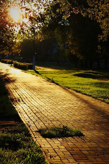 Walkway in park during sunset