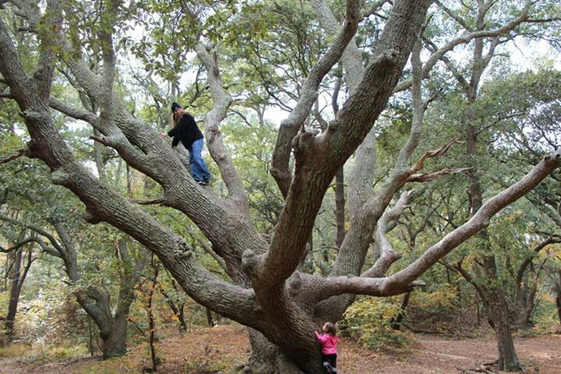 Best Dad Ever RePicture Masculinity Capture The Moment Daddy's Girl Tree Climbing Trees