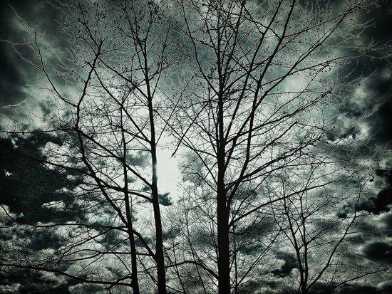 Hanging Out Blackandwhite Trees