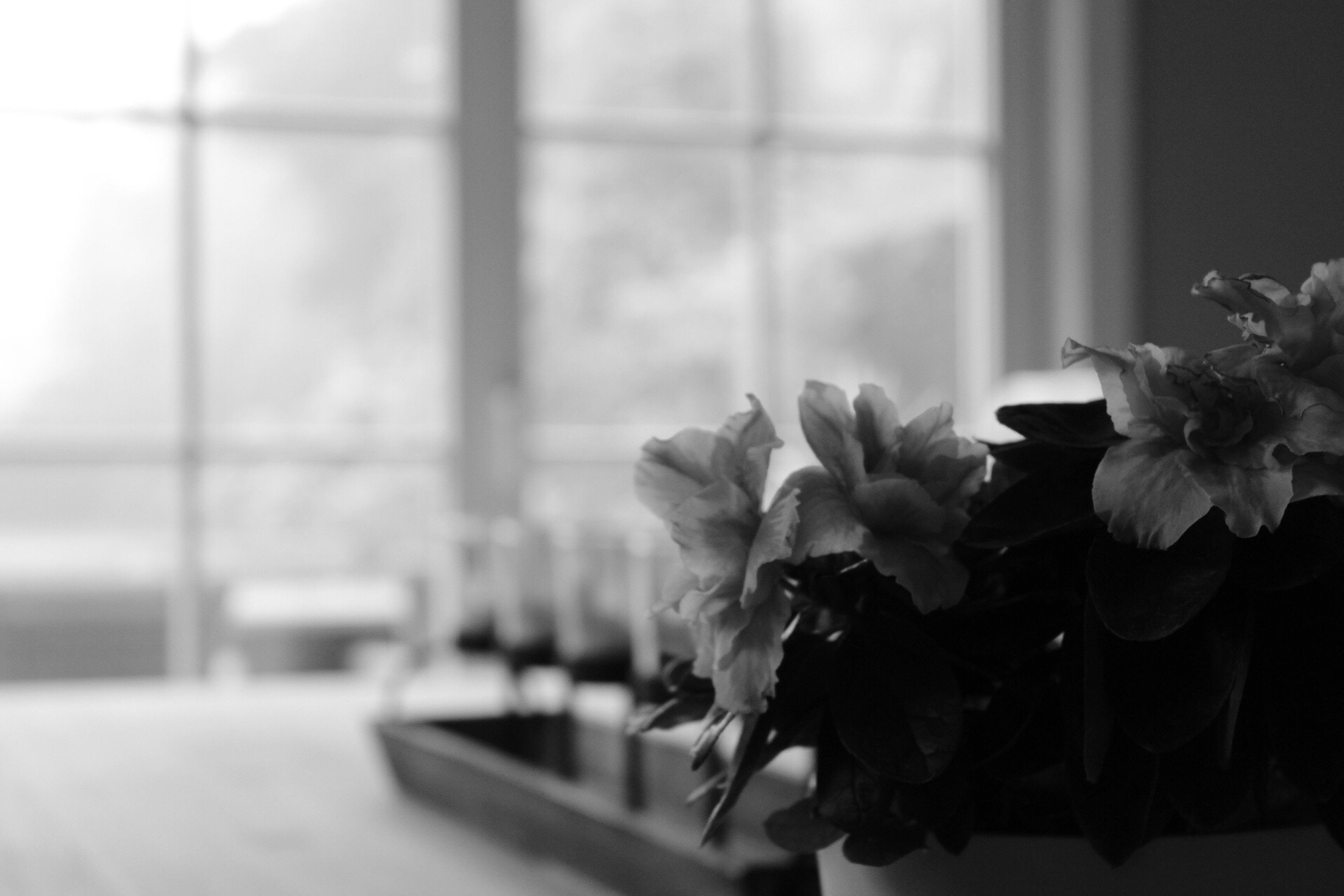 flower, window, indoors, fragility, nature, freshness, close-up, day, beauty in nature, plant, no people, flower head