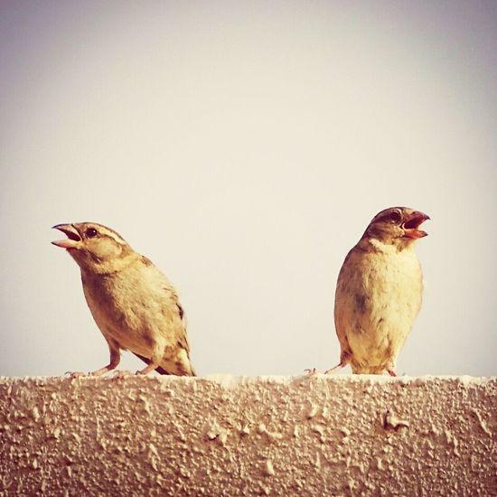 Birdwatching Sidebyside Sunnyafternoon Hx400v