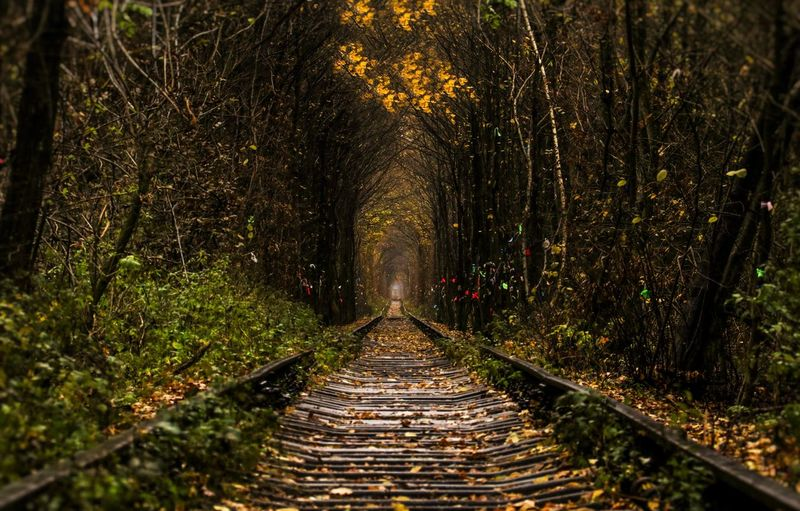 Railroad track amidst trees at forest