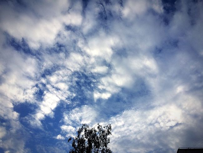 Low Angle View Sky Beauty In Nature Cloud - Sky Nature Tree Day Scenics Tranquility No People Outdoors Growth Branch