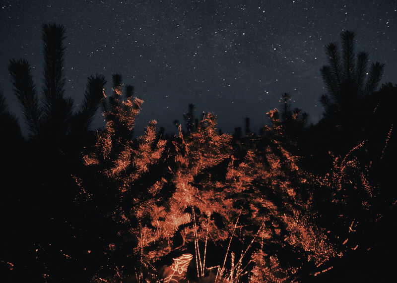 Hellhole Linas Was Here Mystic Nature Pines Evergreen Landscape Nightscape Red Laser Red Light Shadows Starry Sky Stars Woods