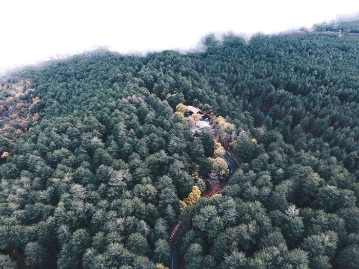 Outdoor vibes Tree Nature Beauty In Nature Landscape Outdoors Drone  Mountain Etna