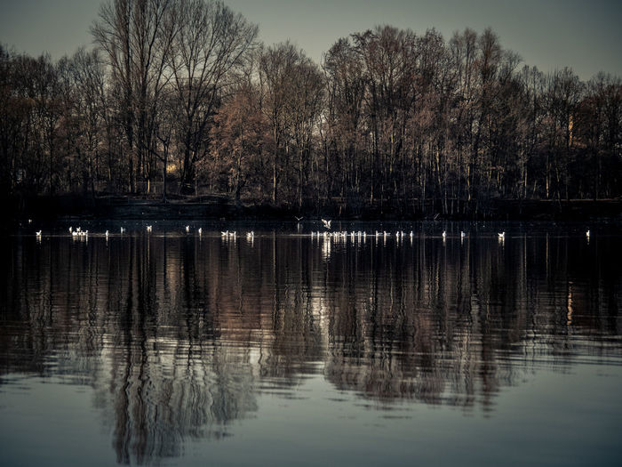 Tree Reflection Water Lake Tranquility Beauty In Nature Waterfront Plant Tranquil Scene No People Scenics - Nature Sky Nature Non-urban Scene Day Idyllic Outdoors Animal Themes Bare Tree