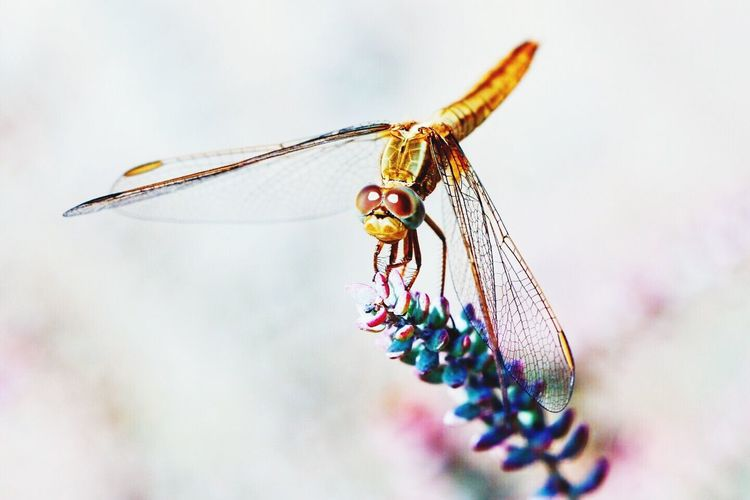 Insect One Animal Animal Wildlife Outdoors Beauty In Nature No People Scenics