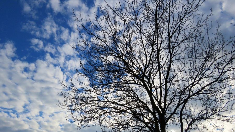 Sky Tree Cloud - Sky Low Angle View Branch No People Beauty In Nature Growth Nature Day Close-up Outdoors Tranquility Plant Canon Colorful Beautiful Canonpowershot DSLR Photography Croatia ❤ Full Frame Sunset Istra