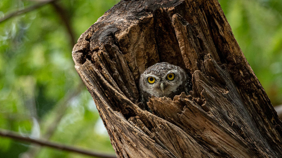 Low angle portrait of owl perching in tree trunk