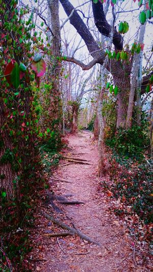 Path In Nature A Walk Down Memory Lane... Nature Photography Naturelover Pathways Path To Spring
