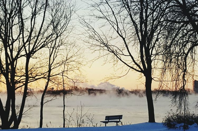 Tree Nature Fog Beauty In Nature No People Water Bare Tree Outdoors Scenics Lake Landscape Frozen Lake Frozen Frosty Mornings Misty Morning Waterfront Sunrises Majestic Sunrise And Clouds Beauty In Nature Non-urban Scene