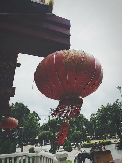 Aflutter Tree Sky Hot Air Balloon Growing