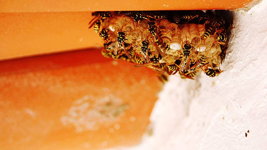 Bees EyeEm