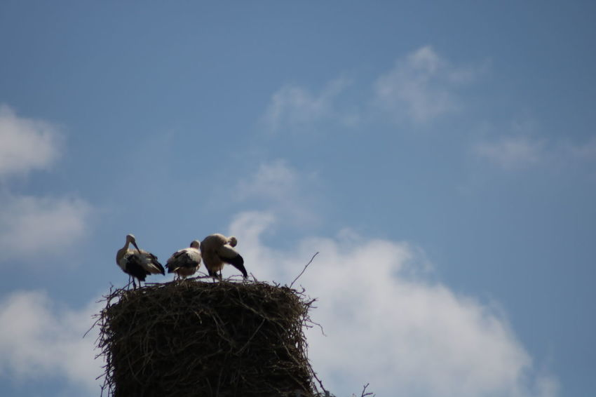 Clear Sky Animal Themes Animal Wildlife Animals In The Wild Bird Day Nature No People Outdoors Stork Storks Young Stork