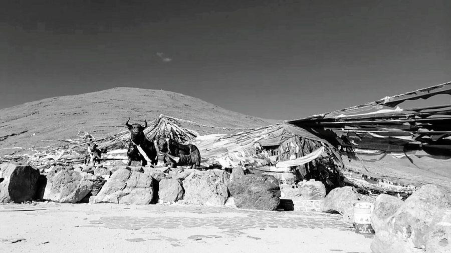 西藏米拉山 EyeEm Selects Landscape Nature Tranquility Environment Outdoors Beauty In Nature Travel