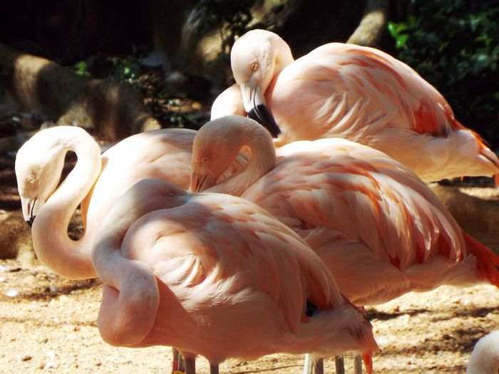 Animal Themes Animal Wildlife Animals In The Wild Beauty In Nature Bird Day Flamingo Nature No People Outdoors Sunlight