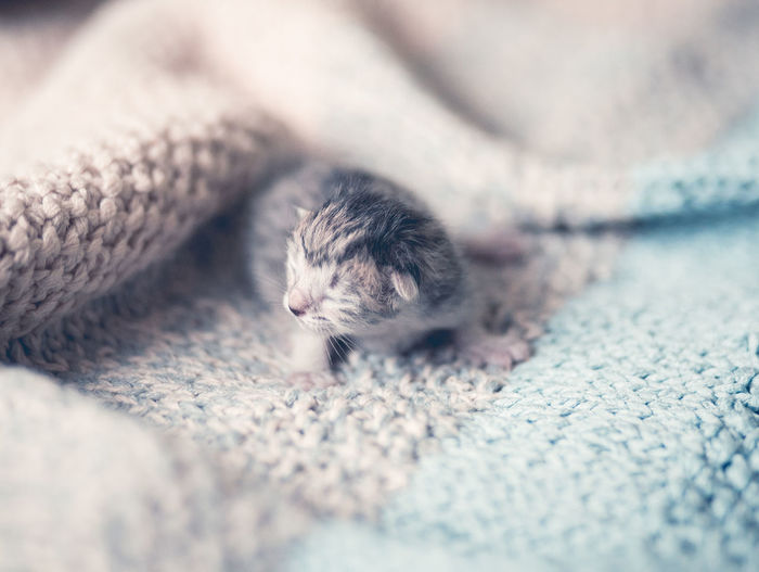 Close-up of kitten on rug