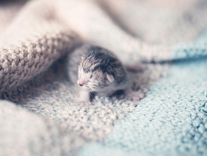 Adorable newborn kitten on blanket Baby Persian Pure Adorable Animal Bristish Short Hair Cat Inocence  Kitten Kittens Of Eyeem Kittensofinstagram Main Coon Kitten Newborn Paw Pet Small Tabby