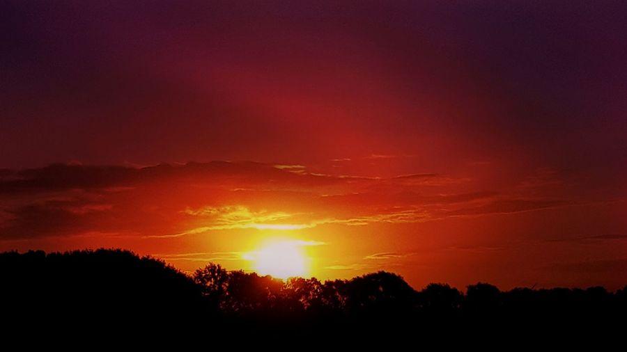 ❤ Infinity Sunstalker Sunlovers Nature EyeEm Best Shots EyeEm Nature Lover Beauty In Nature Red Tree Astronomy Sunset Silhouette Sun Sunlight Dramatic Sky Orange Color Sky Atmospheric Mood Romantic Sky Star Field