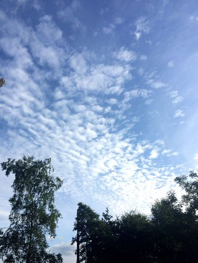 Low Angle View Tree Sky Cloud - Sky No People Nature Day Beauty In Nature Silhouette Growth Outdoors Scenics Eyeem Ireland EyeEm Best Shots EyeEm Nature Lover EyeEm Fish Scales Patterns