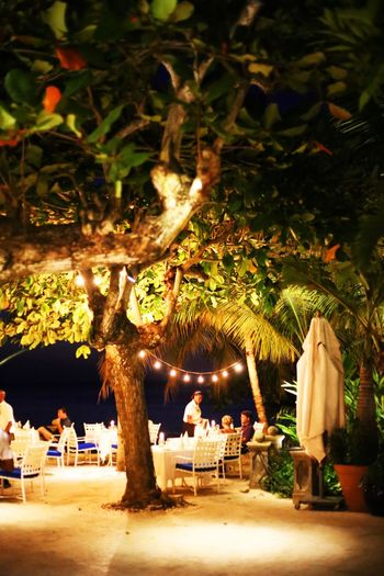 2015  Dinner Illuminated Jamaica Light Montego Bay Night Restaurant Round Hill Hotel & Villas Table Tree ジャマイカ ディナー モンテゴベイ ラウンドヒル レストラン